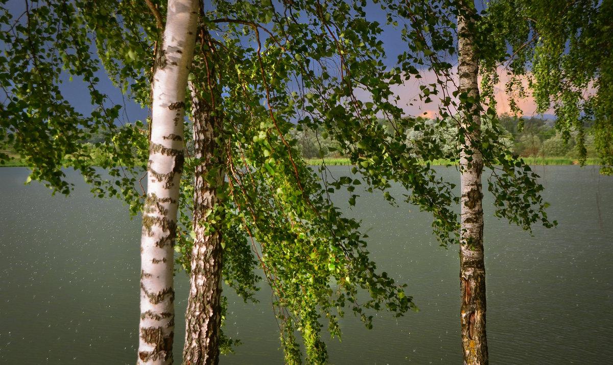 гиф березы река