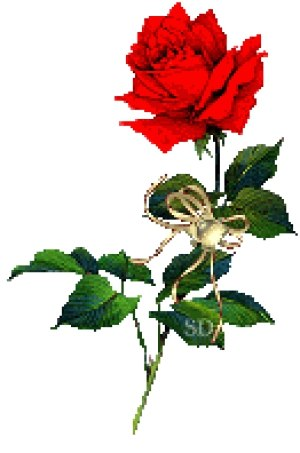 Rose Flower GIF  Roses Flowers Animated GIF Free Download
