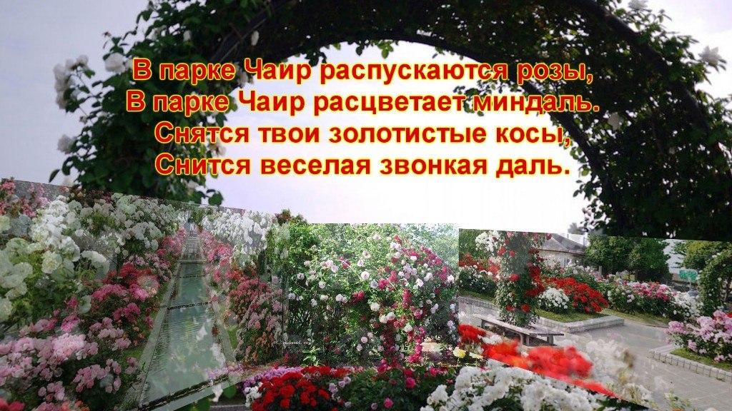 просто картинки в парке чаир распускаются розы шелковице