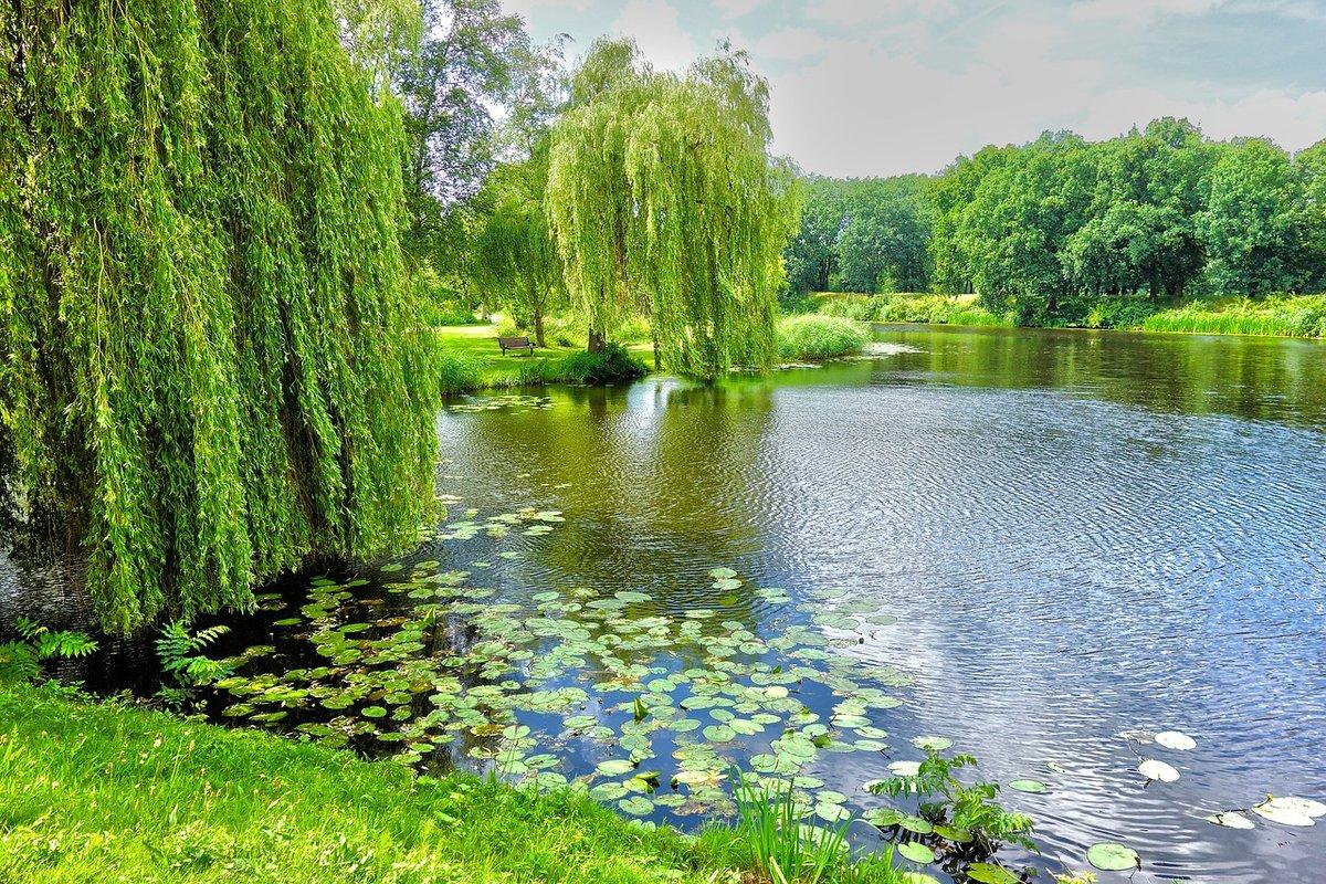 ива у озера картинки предлагаем вам выбрать