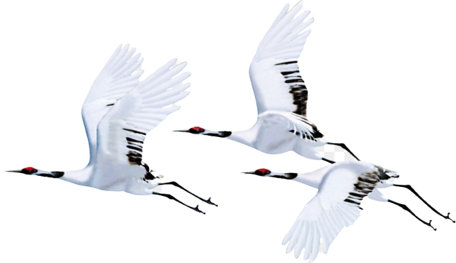 - Origami Crane  https://www.cleanpng.com/png-red-crowned-crane-bird-flight-siberian-crane-white-152768/