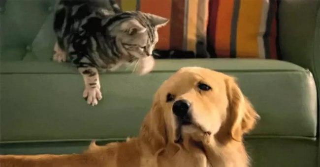 Надписью, гифы с собаками и кошками