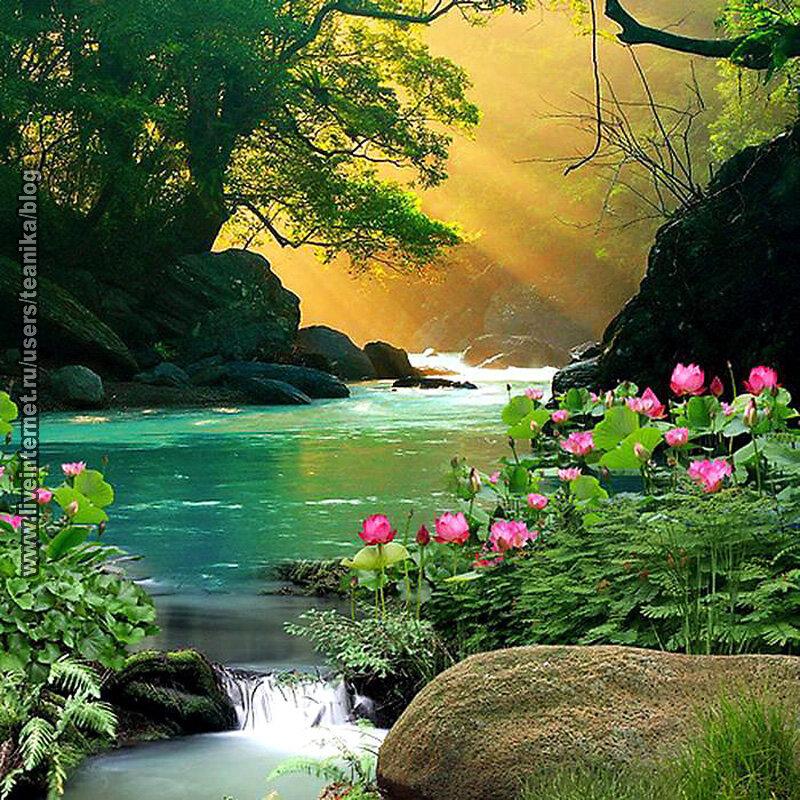 Красоты мира гифы