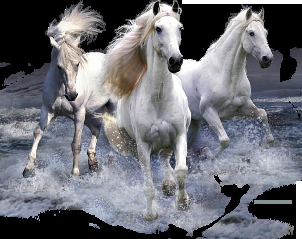 """Картинки по запросу """"гифы три белых коня на прозрачном фоне"""""""