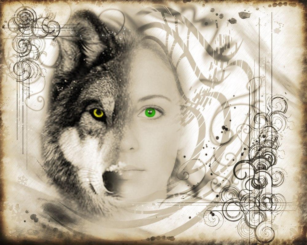 Одинокая волчица картинки, открытки