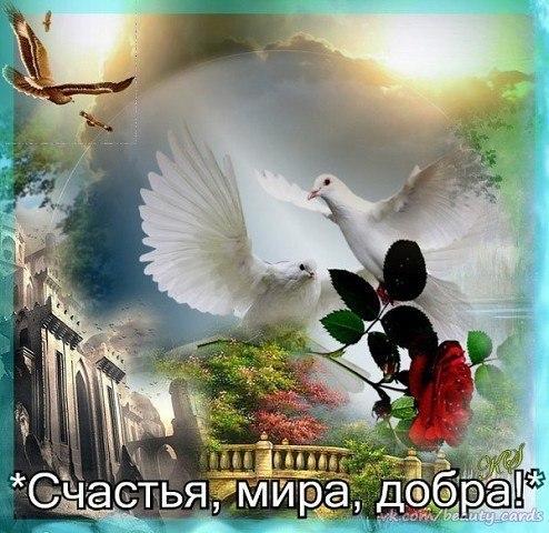 Открыток спасибо, открытки пожелания мира счастья добра