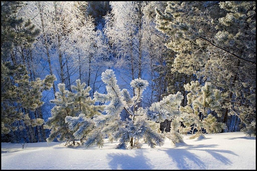 также зимний день живые картинки эпоксидной смолы выглядят