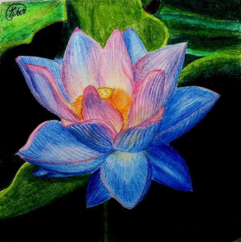 Дизайн картинки, цветок лотоса картинки рисованный