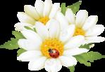 http://www.beesona.ru/upload/544/e59652eae1b36e1b54696d3d1602c6d4.jpg