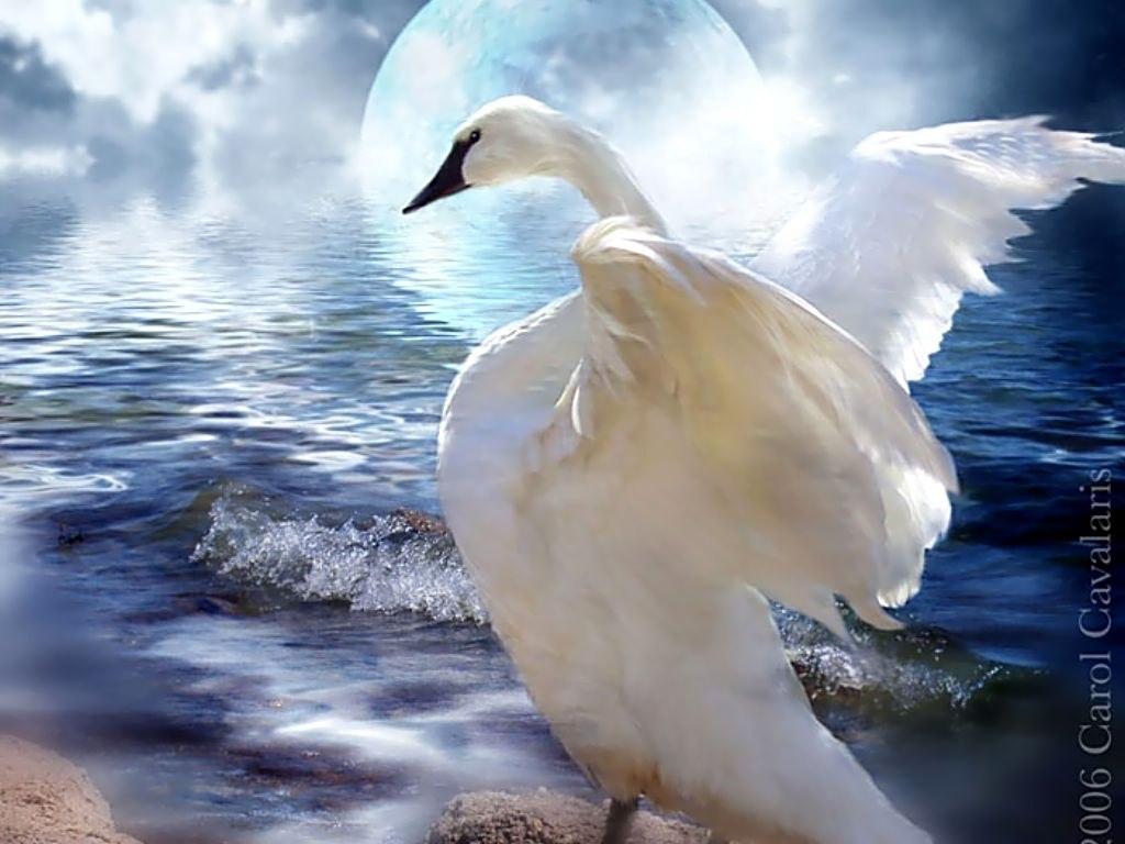 белая птица любви картинки такой