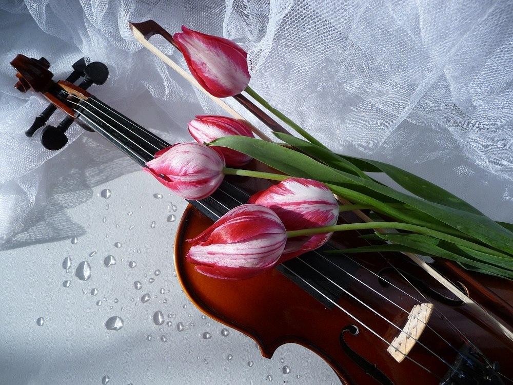 картинки тюльпаны и пианино днем