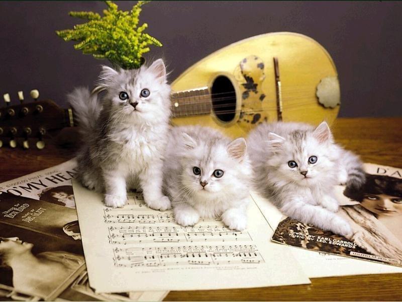 Музыкальные открытки кошки