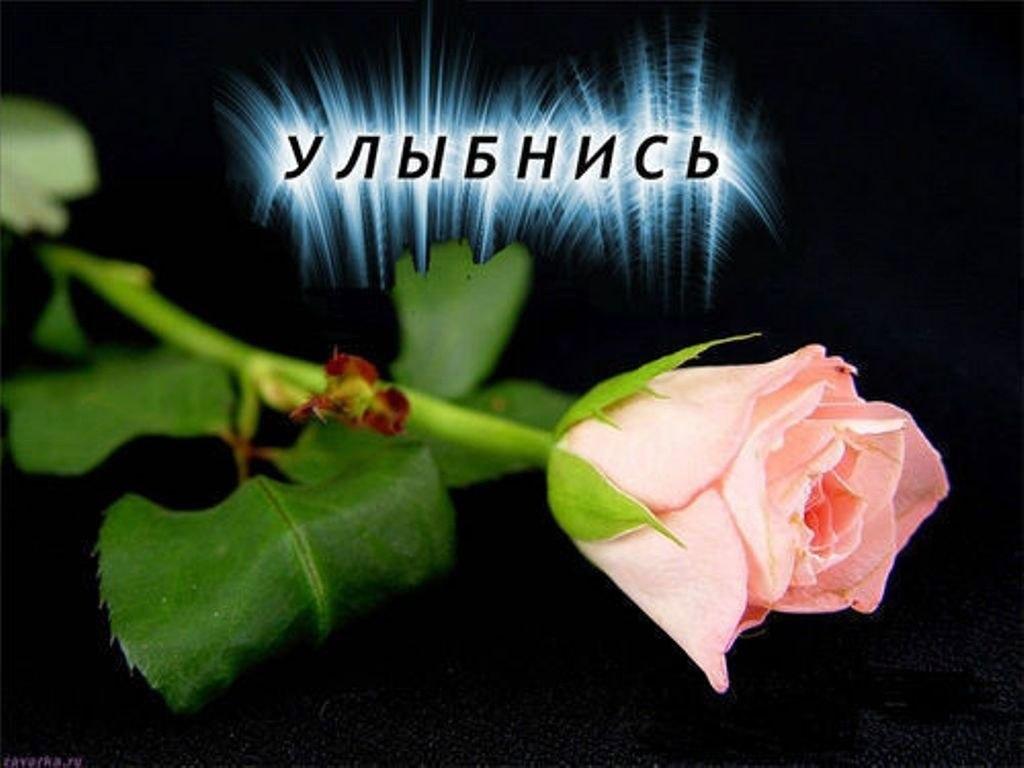 Открытки цветы улыбнись, армия