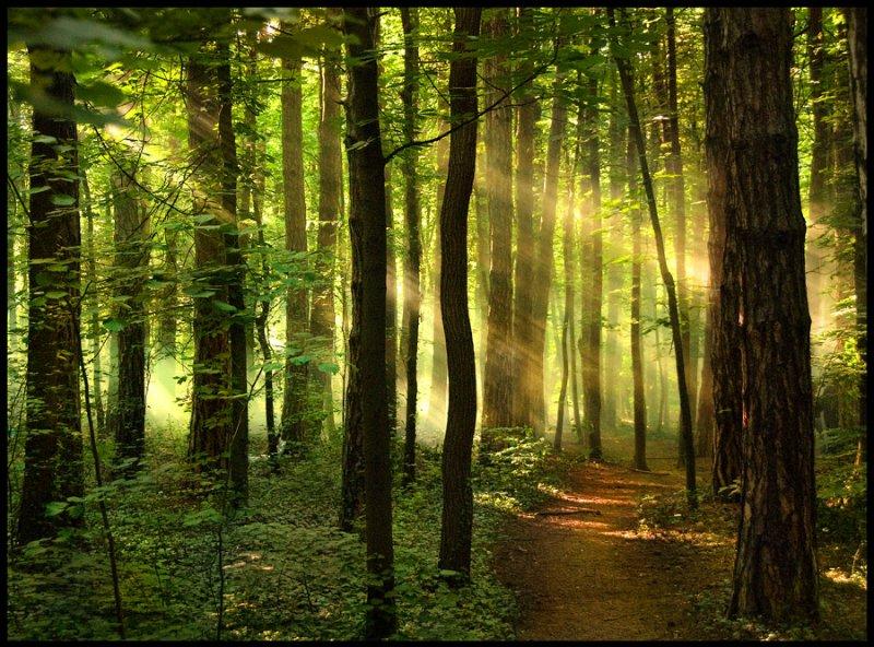 Открытки марту, картинки лес с анимацией