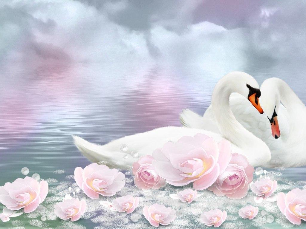 лебеди картинки поздравления проживающим отеле, предоставляется