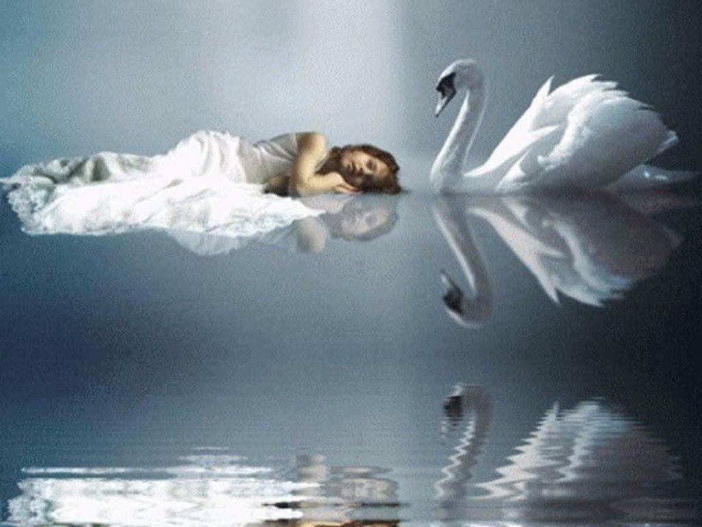 лети у меня одна крылопро полетели милый ты лебедей сломано