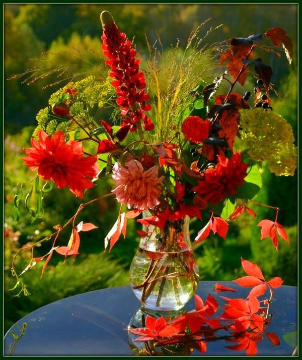 осенние цветы картинки гиф территории поволжья занимался