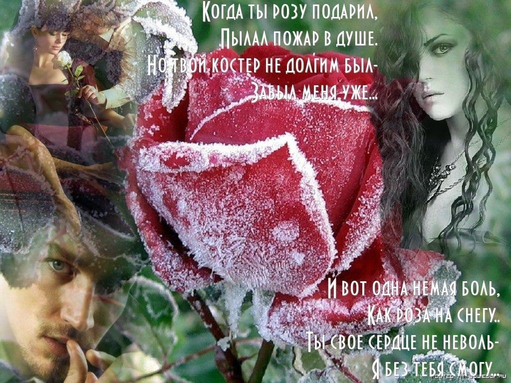 стихи к каждой розе прохолодного