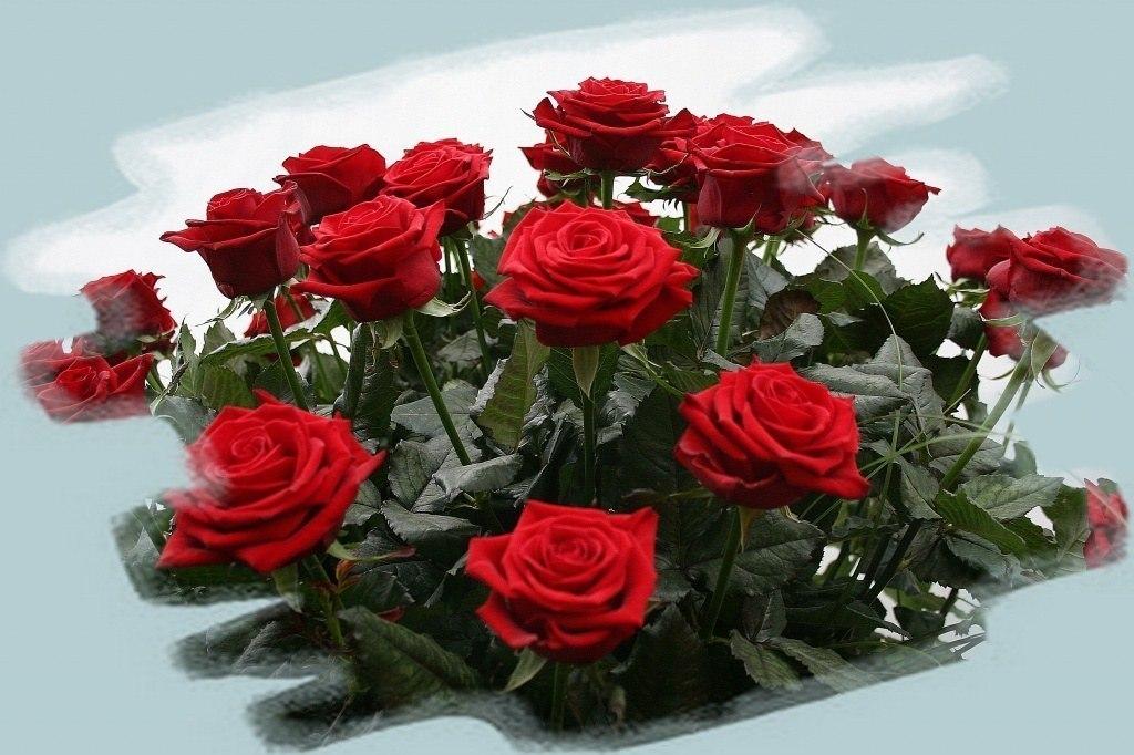 розы фото открытки анимация образом, плавая